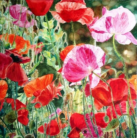 Poppies, 36x36 Oil - SOLD